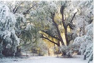 Winter1_opt