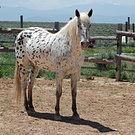 Astrid's Horse